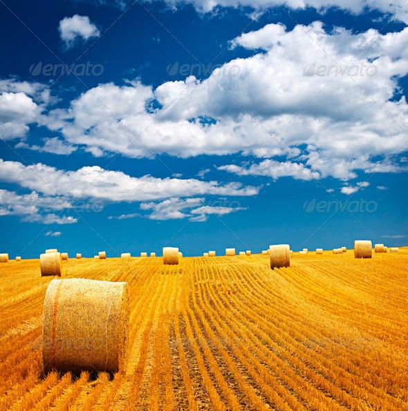 farm_100115_02